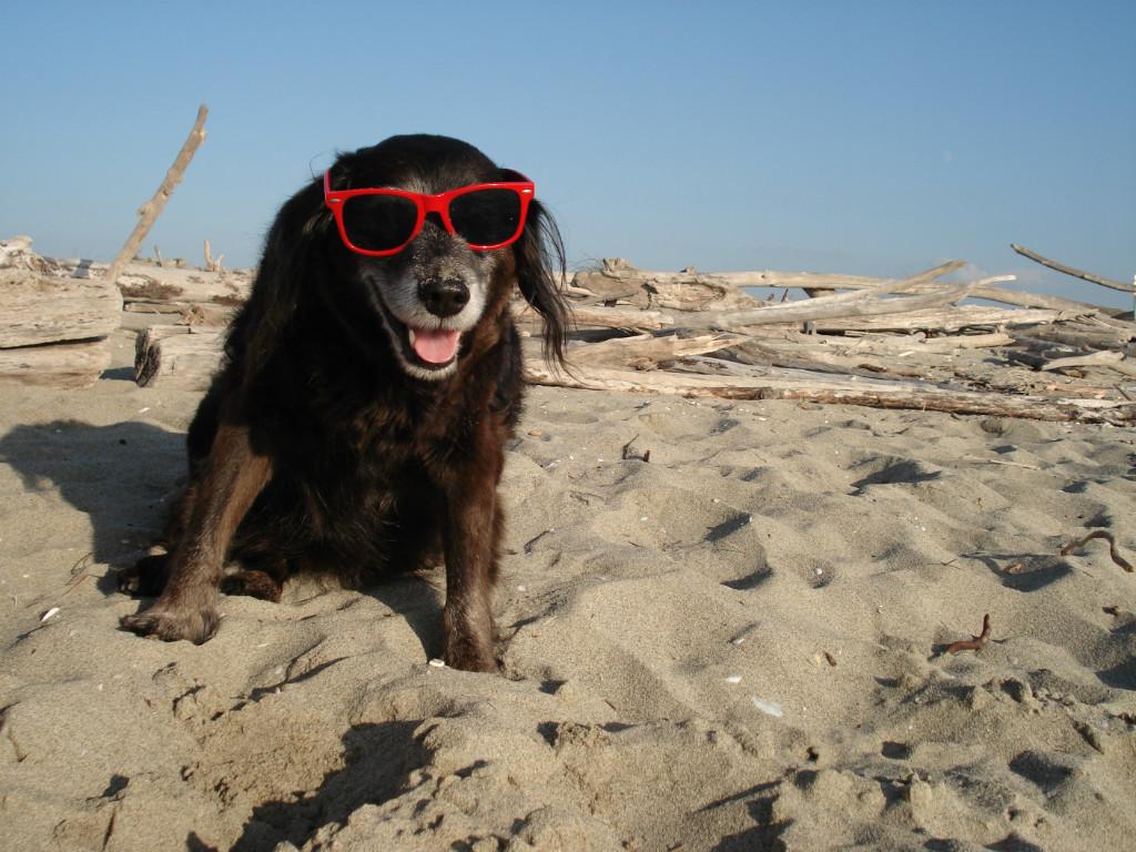 Met uw hond mee op vakantie